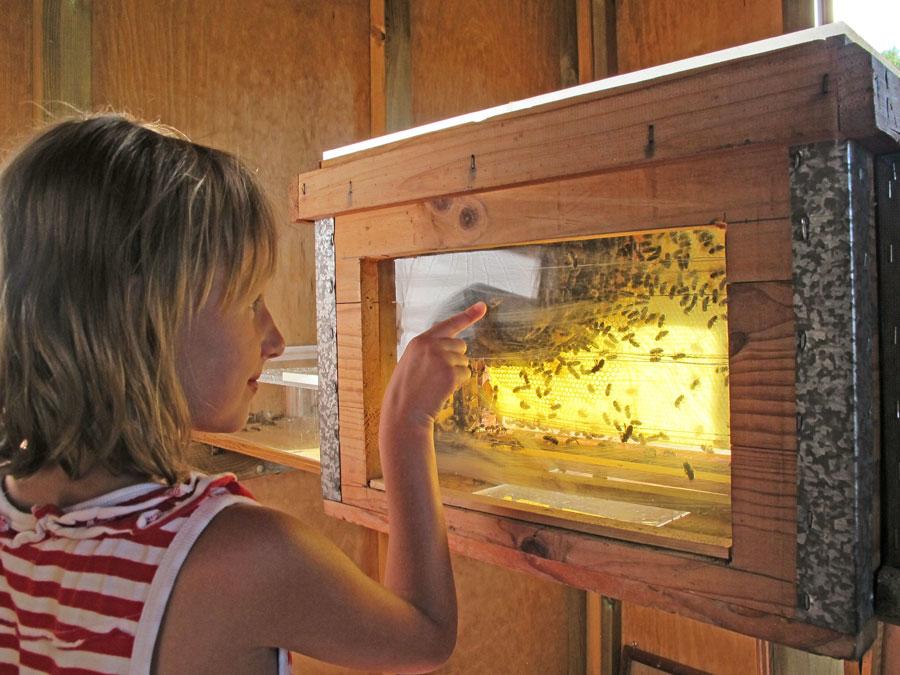 Conoce la vida de las abejas