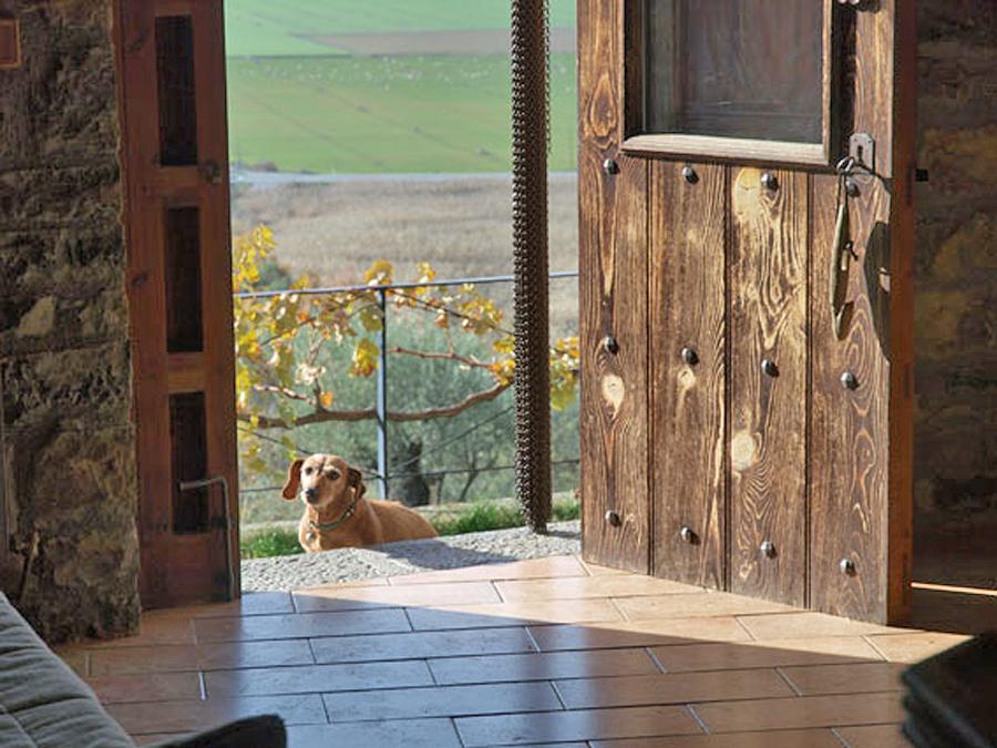 Casa-Oncins-Banaston-mascotas