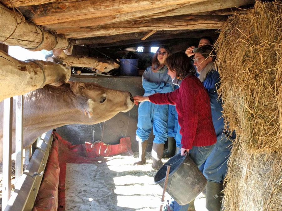Visita una explotación de ganadería extensiva